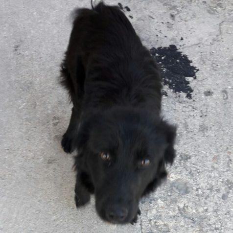 Kujica i jedino preživjelo štene koje su spasili policajci – trebaju udomiteljagall-0