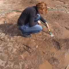 Foto: Kninski muzej završio ovogodišnju kampanju otkrivanja rimskog mozaika i konzervacije rimske vile u Orlićugall-12