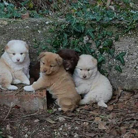 Udruga Berta spasila šteniće od zime i sigurne smrtigall-0