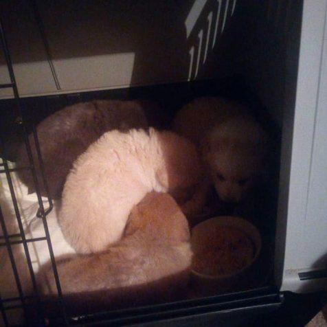 Udruga Berta spasila šteniće od zime i sigurne smrtigall-1