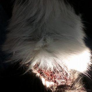 Foto; Video: Monstrum sjekirom izranjavao psagall-2