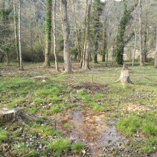 Danas sadnja stabala johe na području Skradinskog bukagall-1