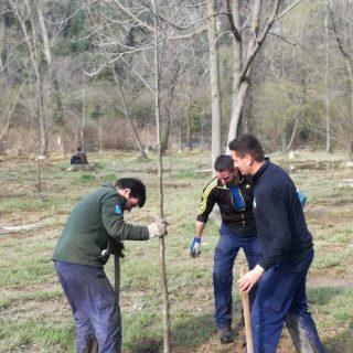 Danas sadnja stabala johe na području Skradinskog bukagall-0