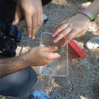 NP Krka: Održana radionica za djecu o bioraznolikosti vodenih staništagall-1