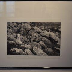 Održano predavanje o rimskim cestama i otvorena izložba Šatornalijegall-12