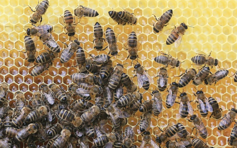 http://huknet1.hr/wp-content/uploads/2019/03/animal-world-apiary-beehive-461099-960x600_c.jpg