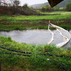 Ekološka katastrofa: U Krki završile vode onečišćene mazutom i teškim metalimagall-2