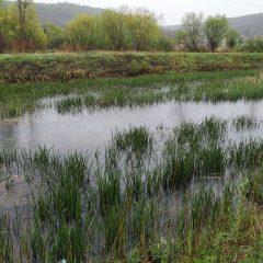 Ekološka katastrofa: U Krki završile vode onečišćene mazutom i teškim metalimagall-6