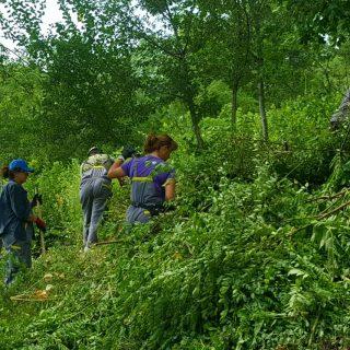Foto vijest: Vrijedni radnici krče Spas i tvrđavugall-1