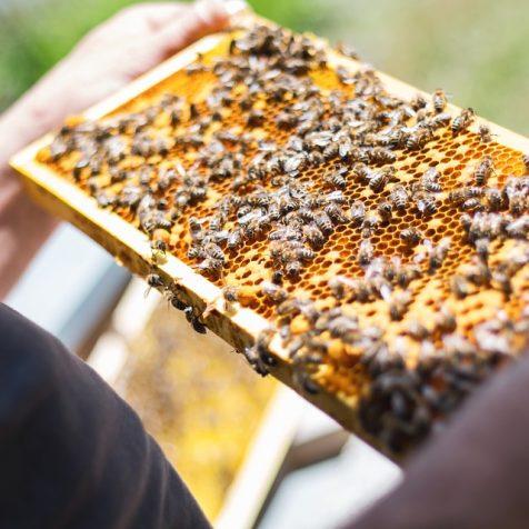 Jeste li probali neodoljive medne proizvode obiteljskog obrta Prominka?gall-0