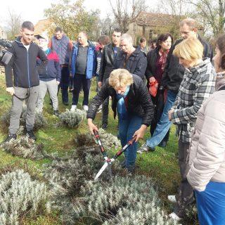 Polaznici edukacija posjetili destileriju u Kistanjama: Učili su o procesu uzgoja i preradi ljekovitog biljagall-2