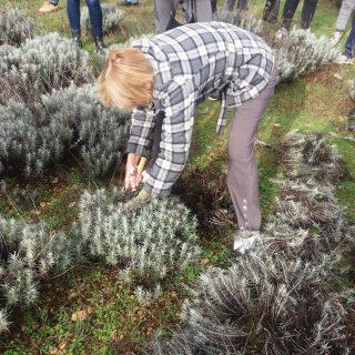 Polaznici edukacija posjetili destileriju u Kistanjama: Učili su o procesu uzgoja i preradi ljekovitog biljagall-4