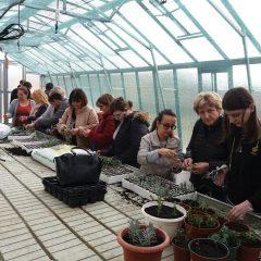 Polaznici edukacije projekta 'Ja želim raditi' u stakleniku škole Lovre Montija učili saditi ljekovito biljegall-0