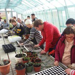 Polaznici edukacije projekta 'Ja želim raditi' u stakleniku škole Lovre Montija učili saditi ljekovito biljegall-1