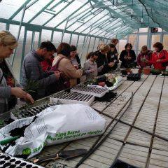 Polaznici edukacije projekta 'Ja želim raditi' u stakleniku škole Lovre Montija učili saditi ljekovito biljegall-2