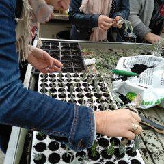 Polaznici edukacije projekta 'Ja želim raditi' u stakleniku škole Lovre Montija učili saditi ljekovito biljegall-4