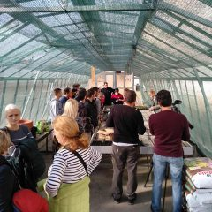 Polaznici edukacije projekta 'Ja želim raditi' u stakleniku škole Lovre Montija učili saditi ljekovito biljegall-5