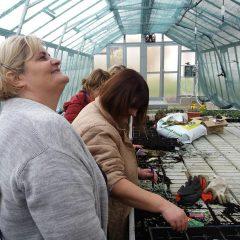 Polaznici edukacije projekta 'Ja želim raditi' u stakleniku škole Lovre Montija učili saditi ljekovito biljegall-6