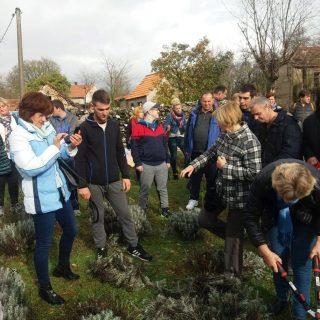 Polaznici edukacija posjetili destileriju u Kistanjama: Učili su o procesu uzgoja i preradi ljekovitog biljagall-1