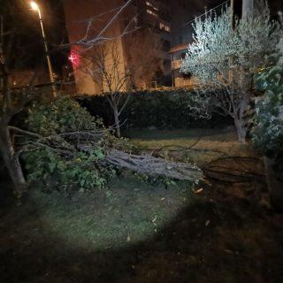 Bura u Kninu lomi stabla i stupove od strujegall-3