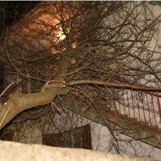 Bura u Kninu lomi stabla i stupove od strujegall-0