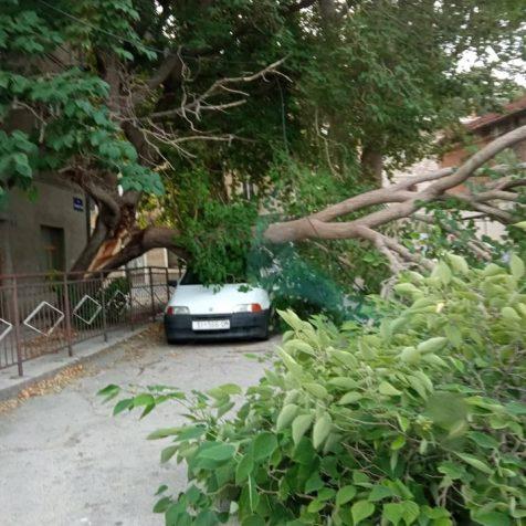 Foto: U starom gradu se odlomilo veliko stablogall-0